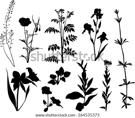 Wildflower Silhouette Stock Photos, Images, & Pictures ...