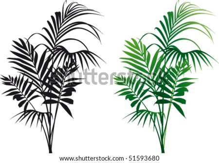 Plant Kentia vector - stock vector