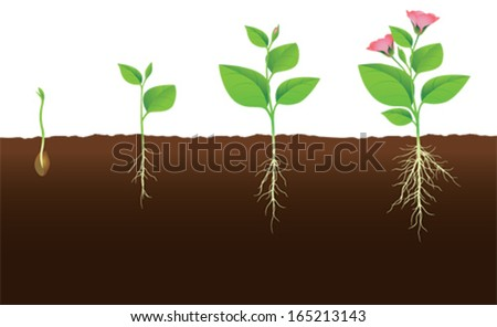 Plant that grows and flourishes - stock vector