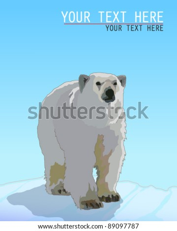 Polar Bear - stock vector