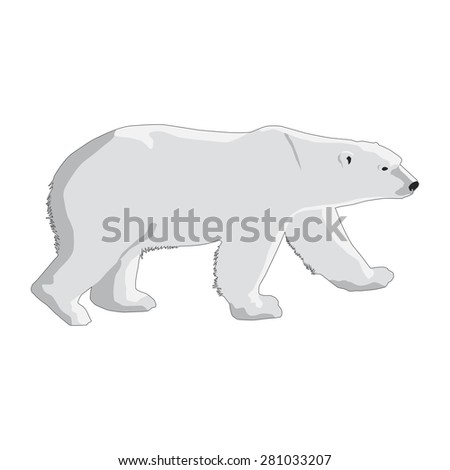 polar bear isolated on a white background - stock vector