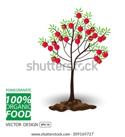 Pomegranate, fruits vector illustration. - stock vector