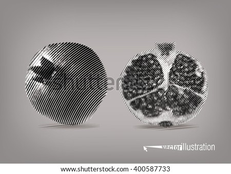 Pomegranate in a cut. Vector artwork in the style of ink drawing - stock vector
