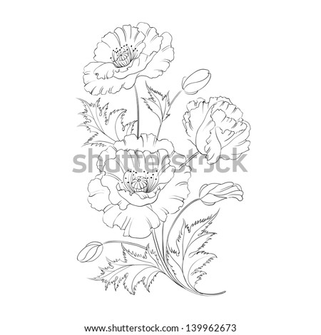 Poppies flower freehand isolated on a white background. Vector illustration. - stock vector
