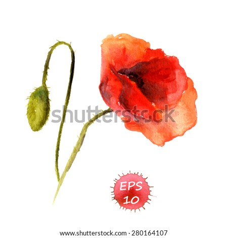 Poppy flower with bud for fashion design. Watercolor vector - stock vector