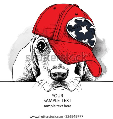 Portrait of dog Basset Hound in a red cap. Vector illustration. - stock vector