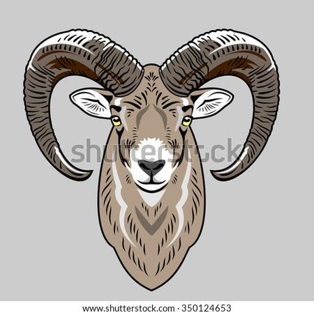 Portrait of lamb (head) - stock vector