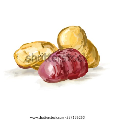 potatoes vector illustration  hand drawn  painted watercolor - stock vector