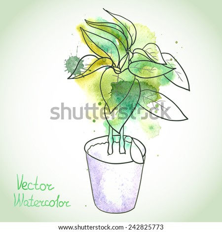 Potted seedlings, bell pepper or other plants. Painted with watercolor splashes and dark outlines. Vector illustration. - stock vector