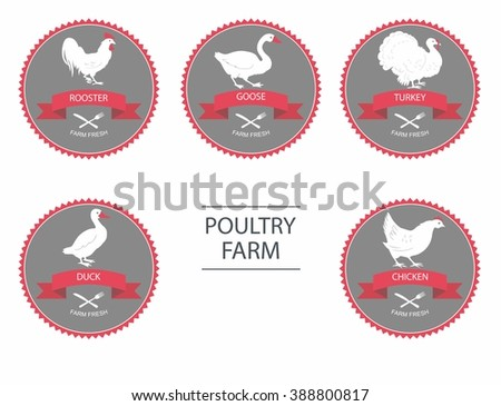 Poultry farm. Set of detailed quality vector silhouettes of chicken, rooster, goose, turkey, duck. label templates with farm birds - stock vector