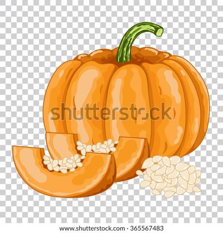 Pumpkin isolated, Pumpkin on transparent background. Pumpkin icon, vector Pumpkin. Organic food, farm food. vegetable from the garden. Raw Pumpkin, Pumpkin slice. - stock vector
