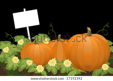 Pumpkin patch at night with blank sign. Large detailed leaves and pale yellow flower blossoms with curly vines. - stock vector