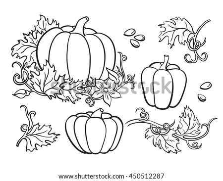 Pumpkin vector drawing set. Isolated outline  vegetable, plant, leaves, flower and seeds. Hand drawn harvest illustration. - stock vector