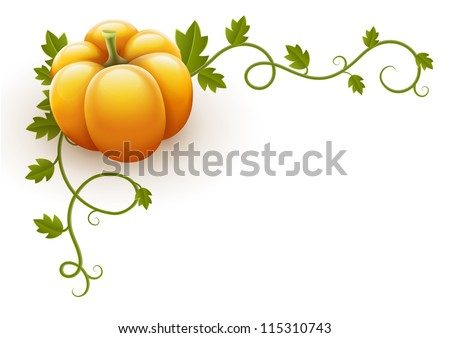 pumpkin vegetable with green leaves vector illustration isolated on white background EPS10. - stock vector