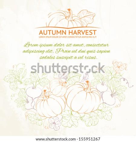 Pumpkins, Autumn harvest. Vector illustration. - stock vector