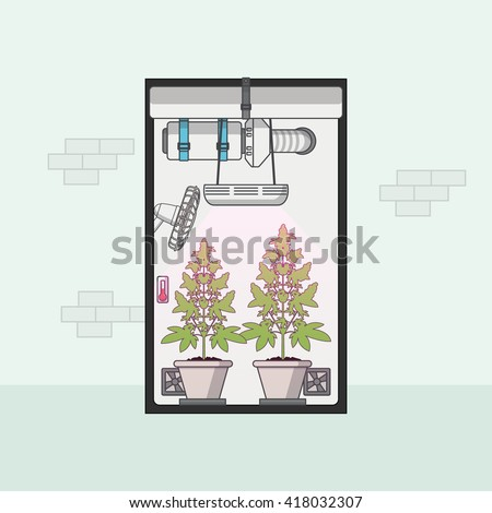Quality Flat Design of medical cannabis growing indoor in growbox. Vector illustration - stock vector