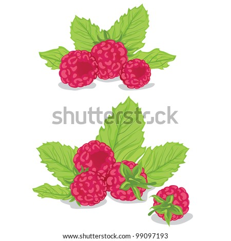 Raspberries with leaves - stock vector
