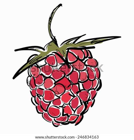 Raspberry berry isolated on white. Vector illustration. - stock vector