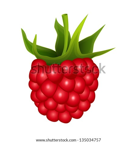 Raspberry on a white background - vector illustration - stock vector