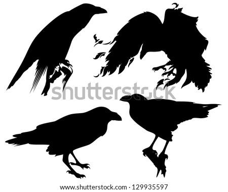 raven birds detailed vector silhouettes - fine black outlines over white - stock vector