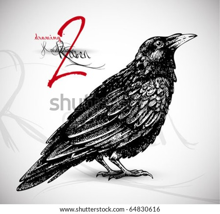 Raven drawing 2 high quality vector - stock vector
