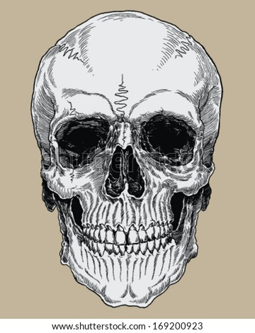 Realistic Cross Hatched Inked Human Skull - stock vector