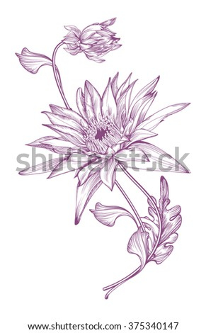 Realistic image of the chrysanthemum  in 