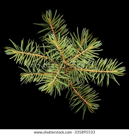 Realistic needles, spruce branches Christmas tree, isolated detailed vector - stock vector