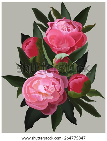 Realistic pink peonies. Vector flower illustration - stock vector