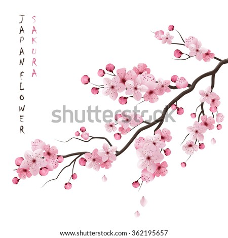 Realistic sakura japan cherry branch with blooming flowers vector illustration - stock vector