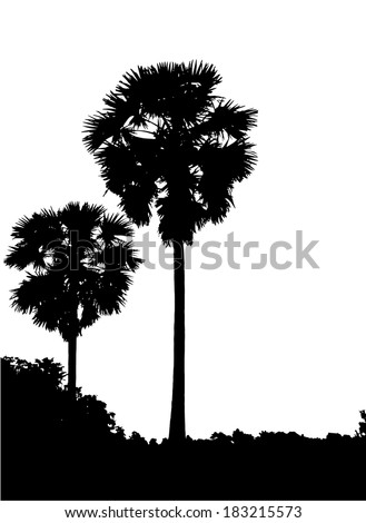 Realistic two Sugar Palm Trees Silhouette - stock vector