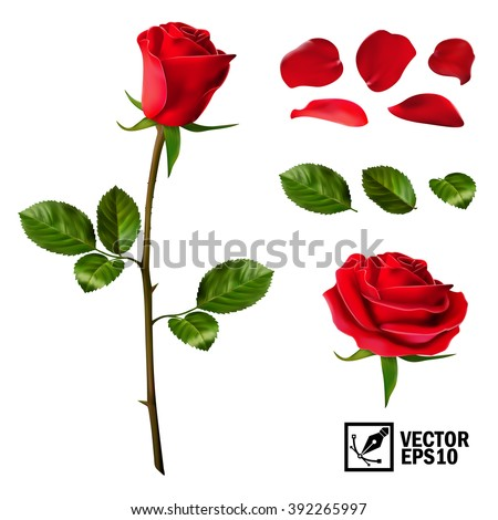 Realistic vector elements set of red roses (petals, leaves, bud and an open flower) with the ability to change the appearance of the flower, as in the constructor - stock vector