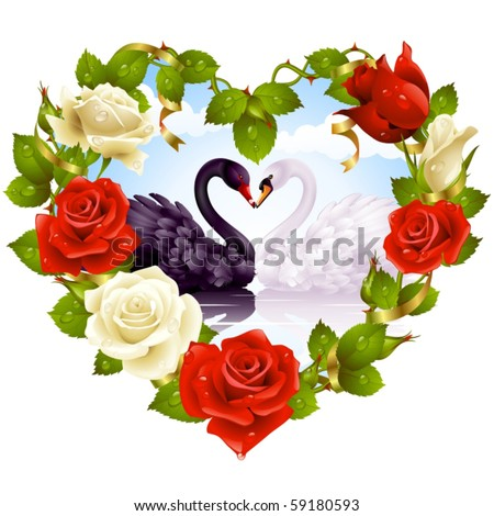 Red and white Roses and couple Swans - stock vector