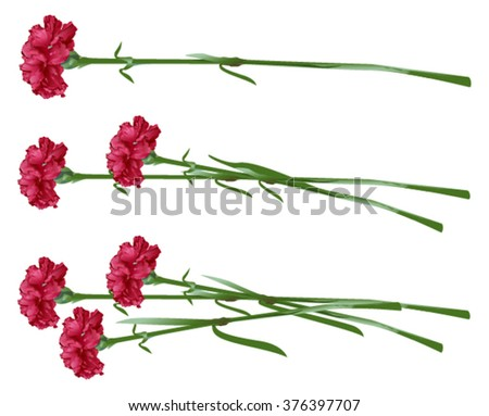 Red clove. Bouquet of carnations. Set carnation flowers. Isolated on white vector illustration - stock vector