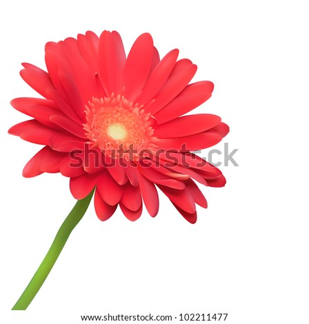 Red flower on white background. Natural elegance illustration design with blooming gerbera - stock vector