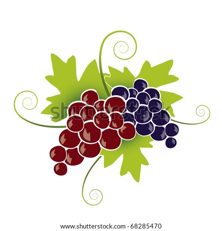 Red Grapes - stock vector