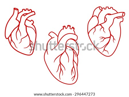 Red human hearts in outline style with aorta, veins and arteries isolated on white background. For cardiology or medical design - stock vector