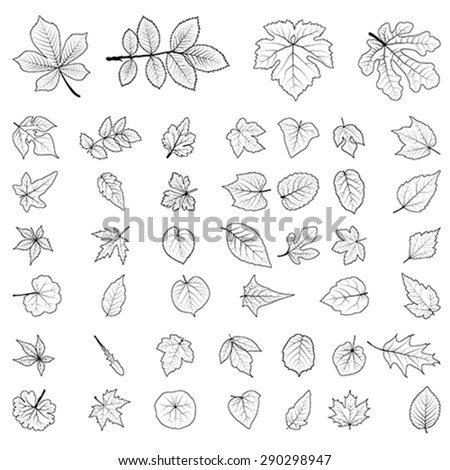 red Leaf collection, vector  - stock vector