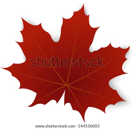 Red maple leaf on a white background - stock vector