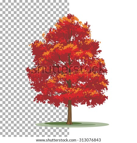Red maple tree. Isolated vector tree on white background. - stock vector