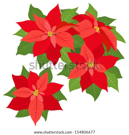 Red poinsettias decorations isolated on white - stock vector