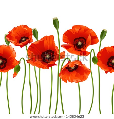 Red poppies in a row. Isolated on white background. Vector illustration - stock vector