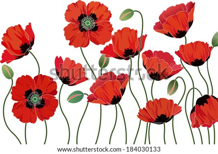 Red poppies isolated on white background - stock vector