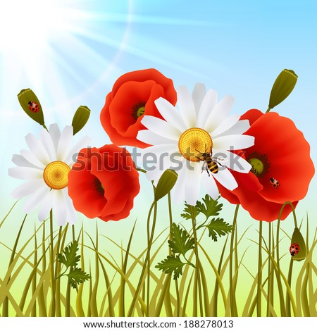 Red romantic poppy flowers white daisies and grass with ladybugs wallpaper vector illustration - stock vector
