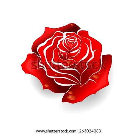 Red rose (vector illustration) - stock vector