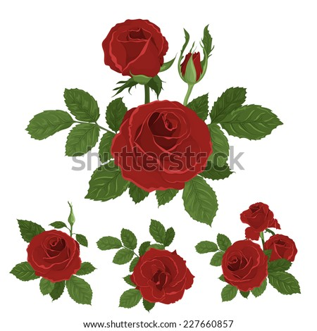 Red roses bouquet with leaves. Isolated hand drawn vector - stock vector