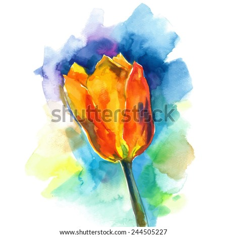 red tulip on a blue background/ vector illustration/ watercolor sketch - stock vector