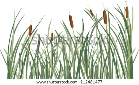 Reed and green grass background vector illustration for design - stock vector