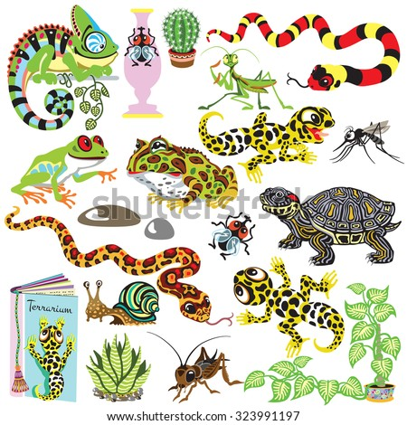 reptiles set , amphibians and insects , isolated cartoon terrarium animals  - stock vector