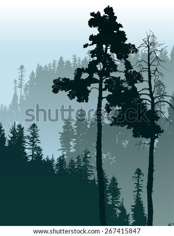 Retro-styled poster with coniferous forest landscape - stock vector